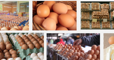 Egg supply business in nigeria