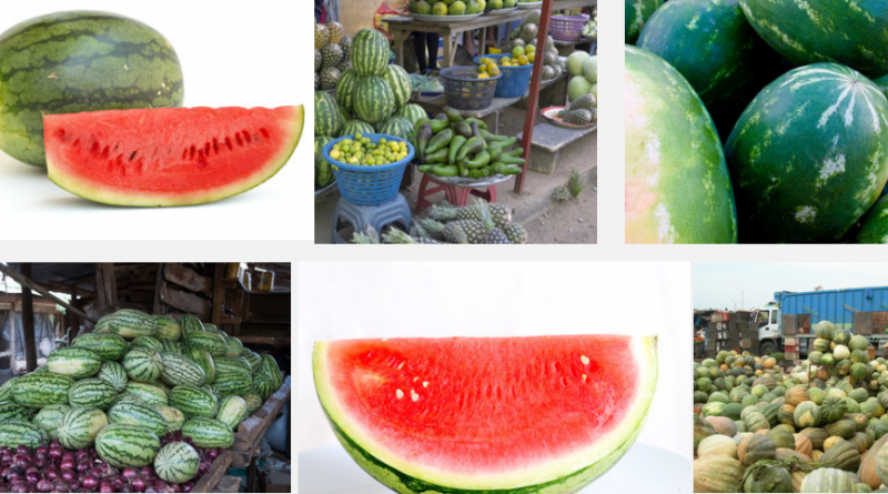 Watermelon business in nigeria