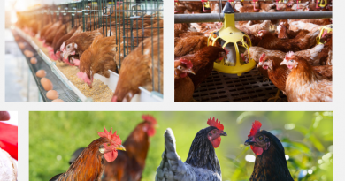 Poultry feed nigeria