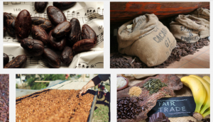 Cocoa Price in Nigeria